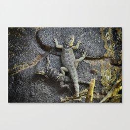 Desert lizards.... Canvas Print
