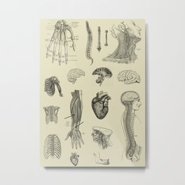 Vintage Anatomy Print Metal Print