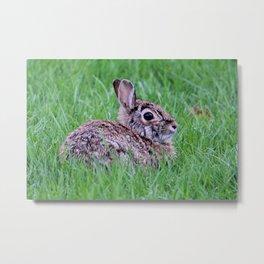 Bunny 1 Metal Print