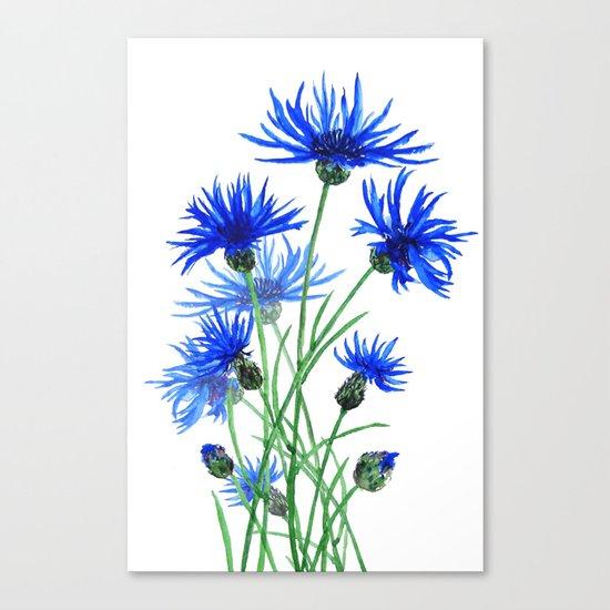 blue cornflower Canvas Print
