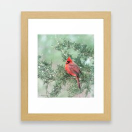 Christmas Bird (Northern Cardinal) Framed Art Print