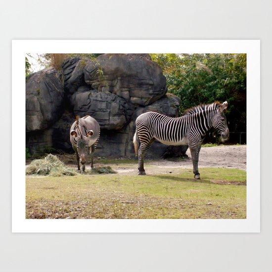 Magestic Zebras Art Print