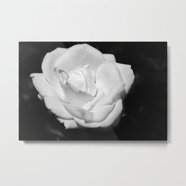 Heart Petal White Rose Metal Print