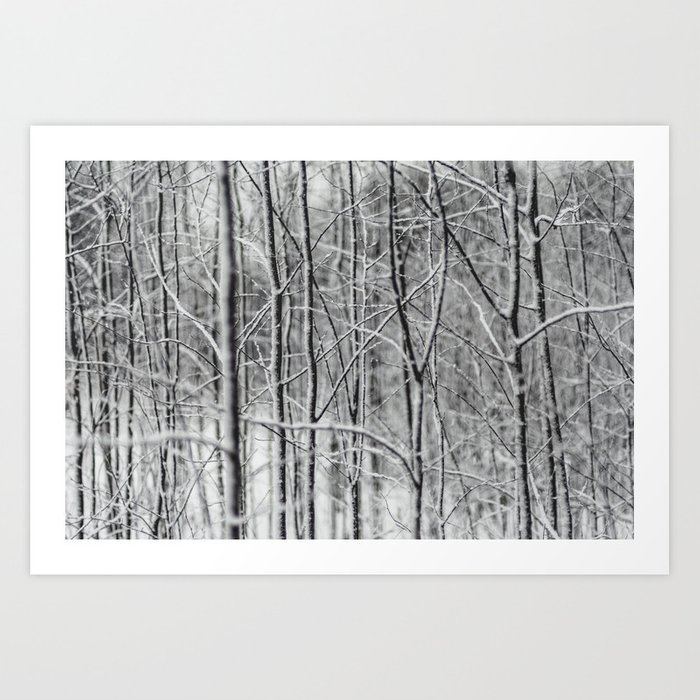 Frosted Forest Art Print