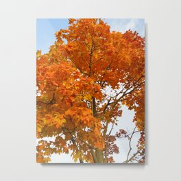 The Colors Brought To Autumn Metal Print