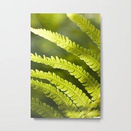 part of the broad fern leaf Metal Print
