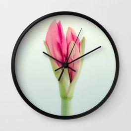 Lovely Amaryllis Peeking Through Wall Clock