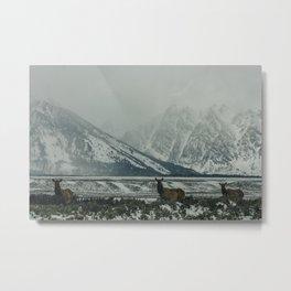 Elk in Grand Teton Metal Print