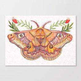 Hawk Moth Canvas Print