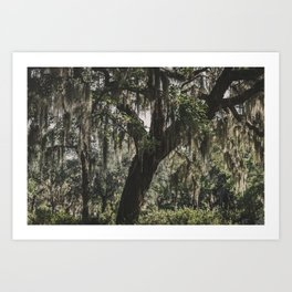 Savannah Spanish Moss Art Print