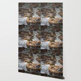 Mallard Family Wallpaper