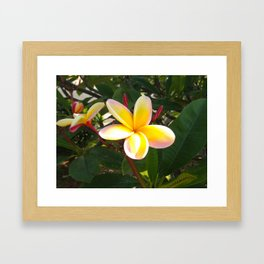 Flower in North Shore, Hawaii Framed Art Print