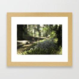 Mountain Forest Floor Framed Art Print