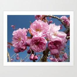 Pink Cherry Blossom, Blue Sky Art Print