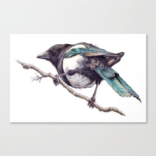 Juvenile Magpie 02 Canvas Print