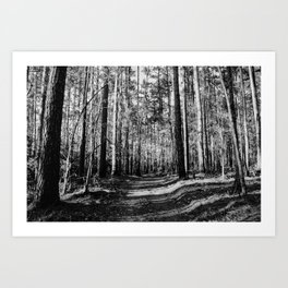 Forest Trail Art Print