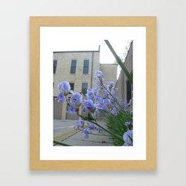 june iris2 Framed Art Print