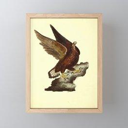 Sea Eagle falco ossitragus3 Framed Mini Art Print