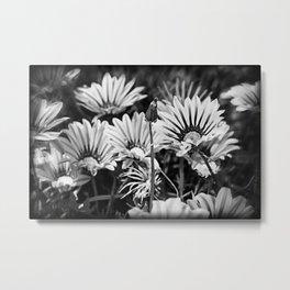 Desert Daisies (bnw) - Daisy Project in memory of Mackenzie Metal Print