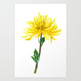 one yellow chrysanthemum Art Print