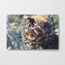 Seed Head Metal Print