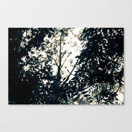 Sun Drops Canvas Print