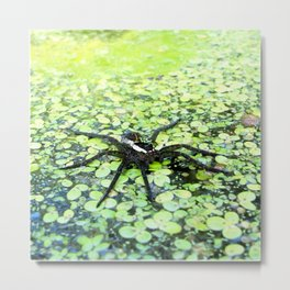 Watercolor Spider, Fishing Spider 01, Merchant's Millpond, North Carolina, Don't Move! Metal Print