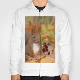 squirrel grass leaves fall fluffy tail sit Hoody