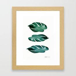 no.534. Monstera Leaves. Botanical art Framed Art Print