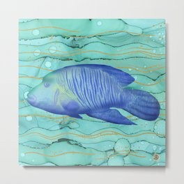 Humphead Wrasse Exotic Fish Swimming in the Coral Reef Emerald Water Metal Print