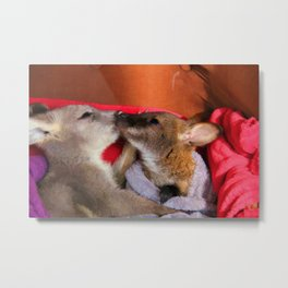 First Love  - Wallaby Babies Metal Print