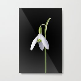 Solo Perfection Metal Print