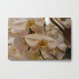 Peabody Orchid I Metal Print