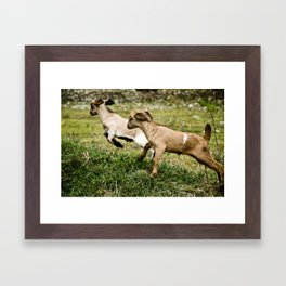 galop Framed Art Print