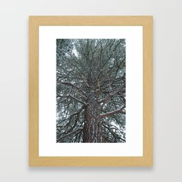 Pine Framed Art Print