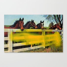 Untitled (Horses) Canvas Print