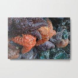 Starfish Huddle Metal Print