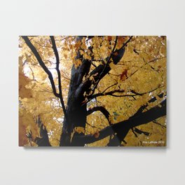 October branches Metal Print