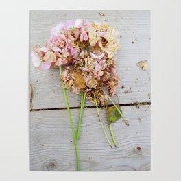 Shabby chic pink geranium Poster