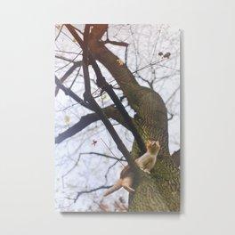 Little orange cat on a big tree Metal Print