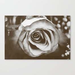 Rose with Raindrops in Tintype Canvas Print