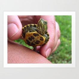 Baby red-eared slider turtle Art Print