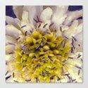 Flower Purple Yellow by kassablaka