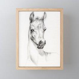 Arabian Horse Foal Portrait Graphite pencil drawing Equine illustration Framed Mini Art Print
