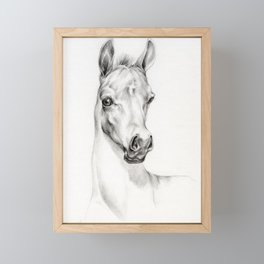 Arabian Horse Foal Portrait Graphite pencil drawing Equine illustration Framed Mini Art Print