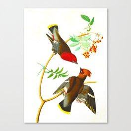 Bohemian Chatterer Bird Canvas Print