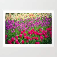 Fields of Color I, Woodburn Tulip Festival Art Print