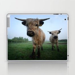 Young White High Park Cattle Laptop & iPad Skin