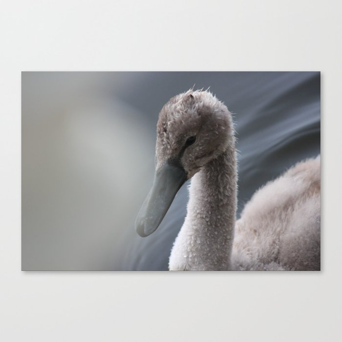 The Ugly Duckling Canvas Print