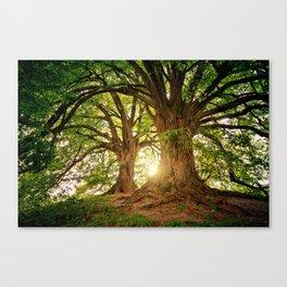 Magnificent Forest Canvas Print